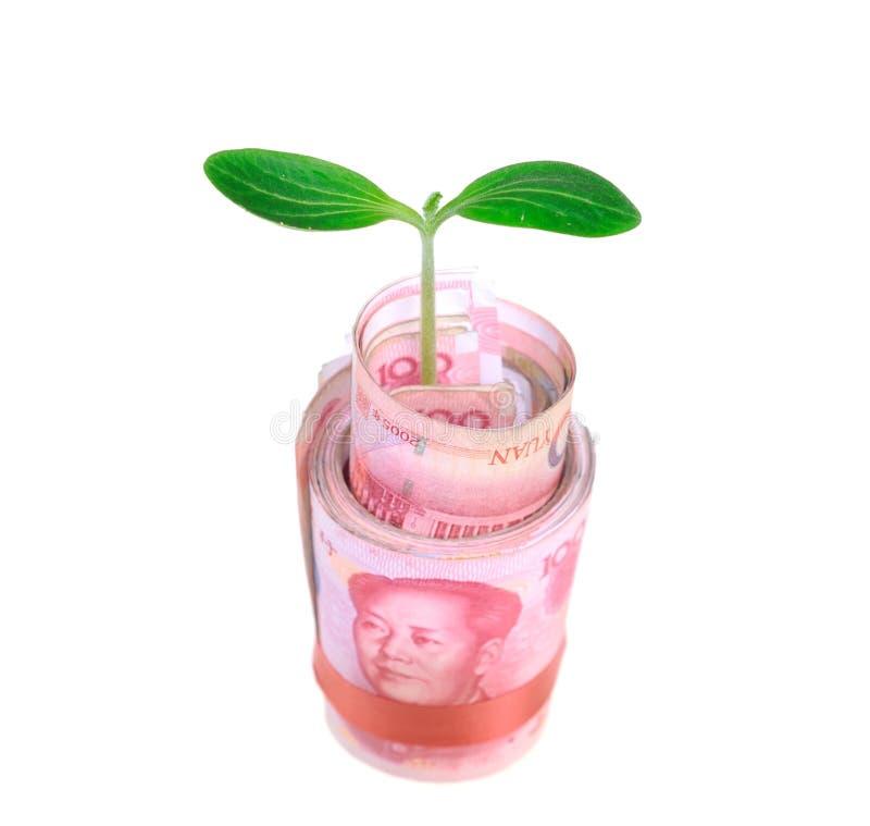 生长在金钱的绿色植物叶子 免版税库存照片