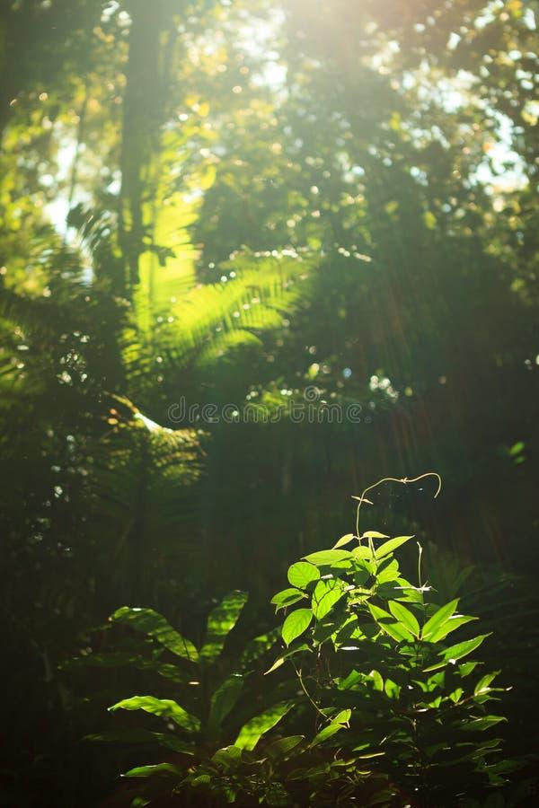 生长在雨林的小植物 库存图片