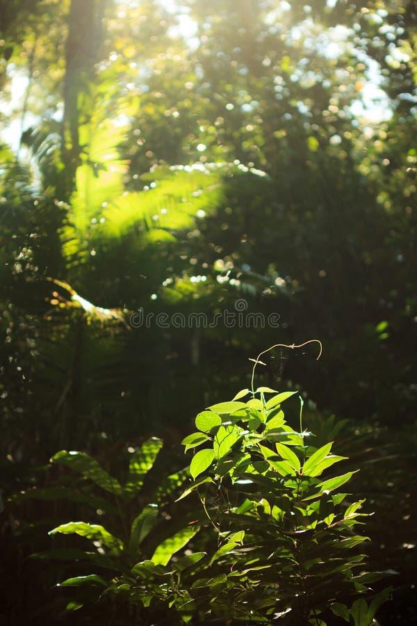 生长在雨林的小植物 免版税库存图片