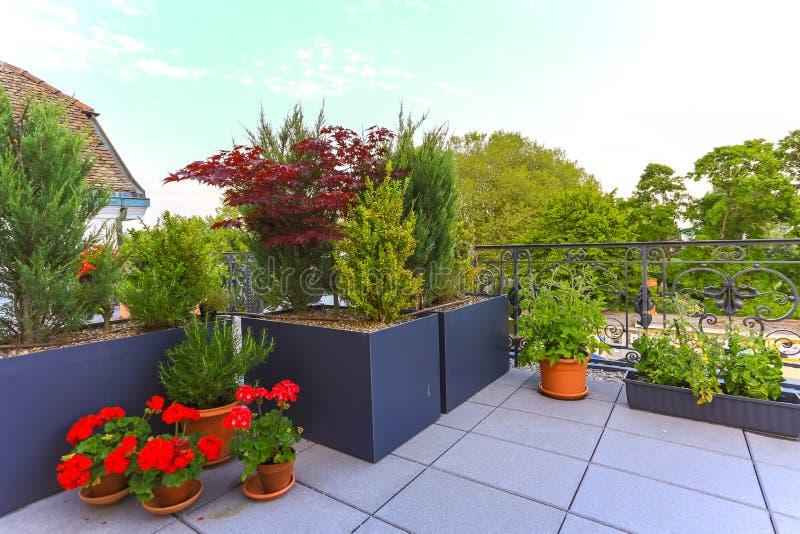 生长在露台的装饰盆的植物 免版税库存图片