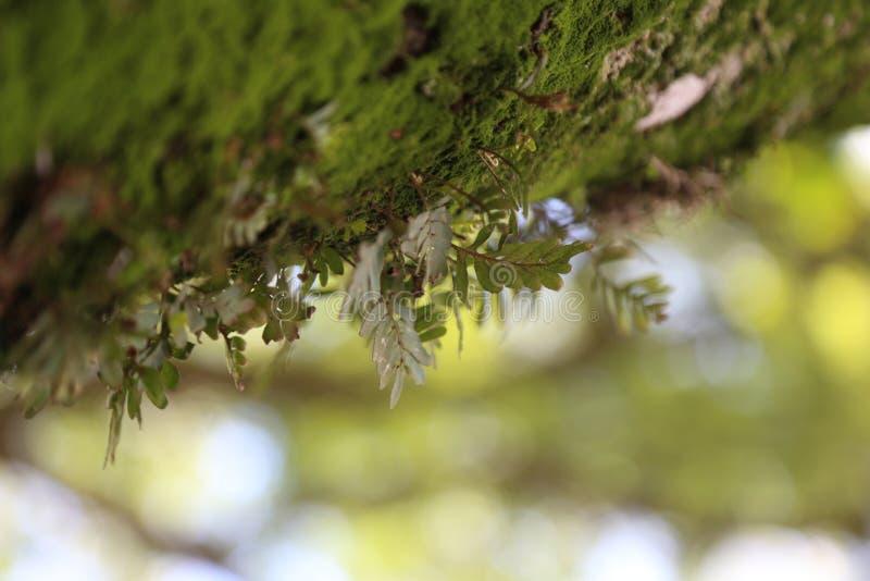 生长在青苔的小植物特写镜头有被弄脏的自然本底 图库摄影