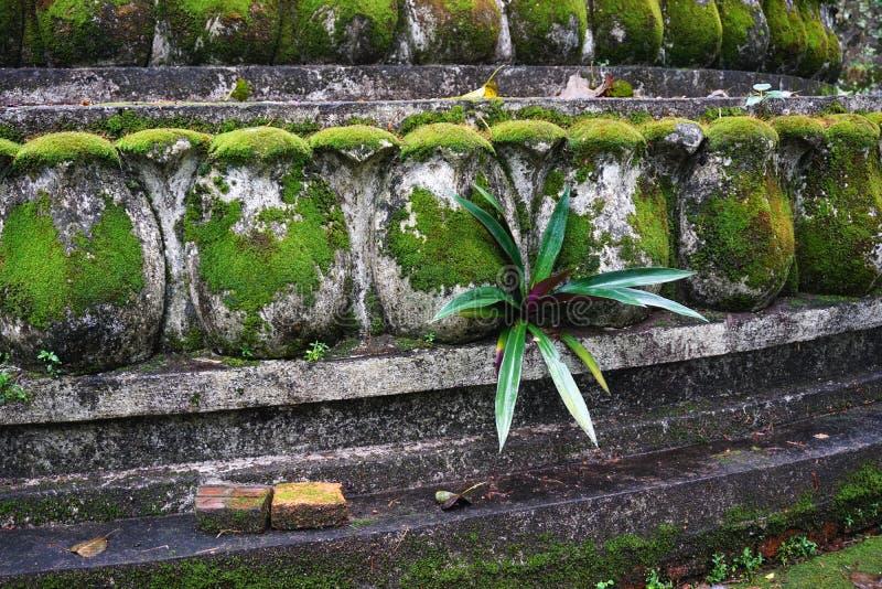 生长在青苔的豪华的绿色热带植物在琅勃拉邦,老挝盖了古老被雕刻的石墙 免版税图库摄影
