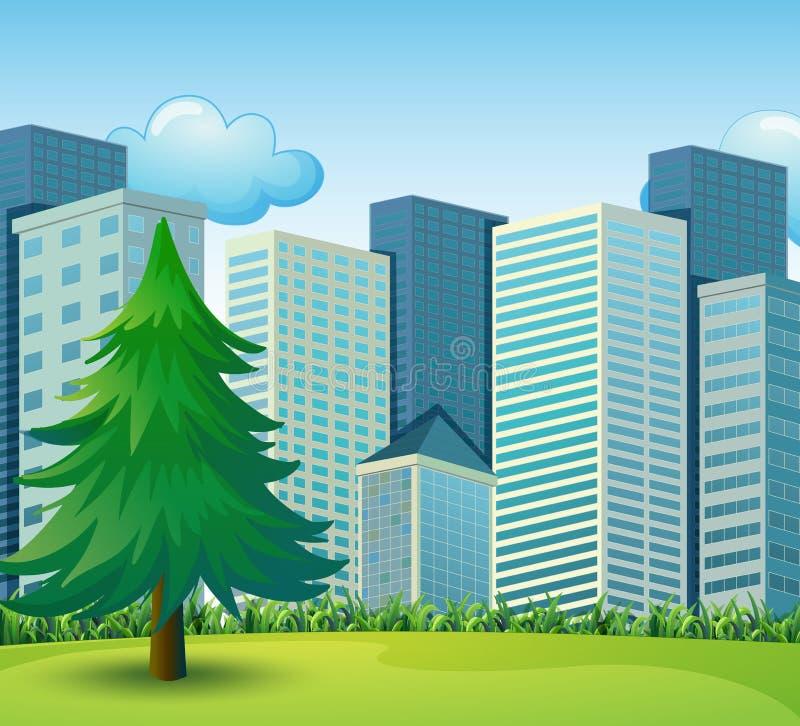 生长在高楼附近的一棵大杉树 向量例证
