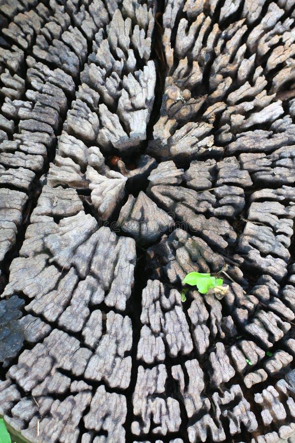 生长少许老工厂结构树 免版税库存图片