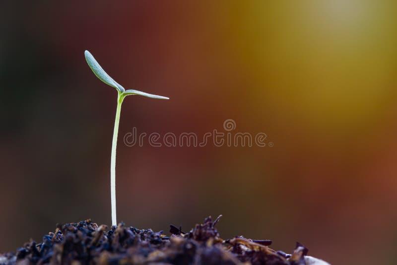 生长您的生活,财富,事务,财政概念 在好土壤的成长文本设计的新芽与太阳光和空间 库存图片