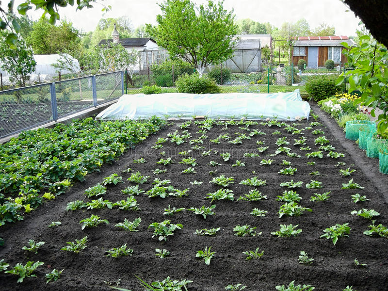 生长植物在庭院里 免版税库存图片