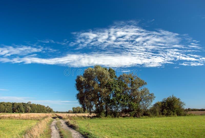 生长沿乡下公路和天空蔚蓝的大树 免版税库存照片