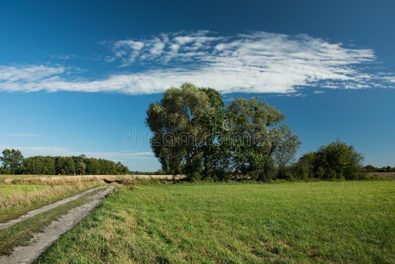 生长沿乡下公路和白色云彩的树在天空蔚蓝 图库摄影