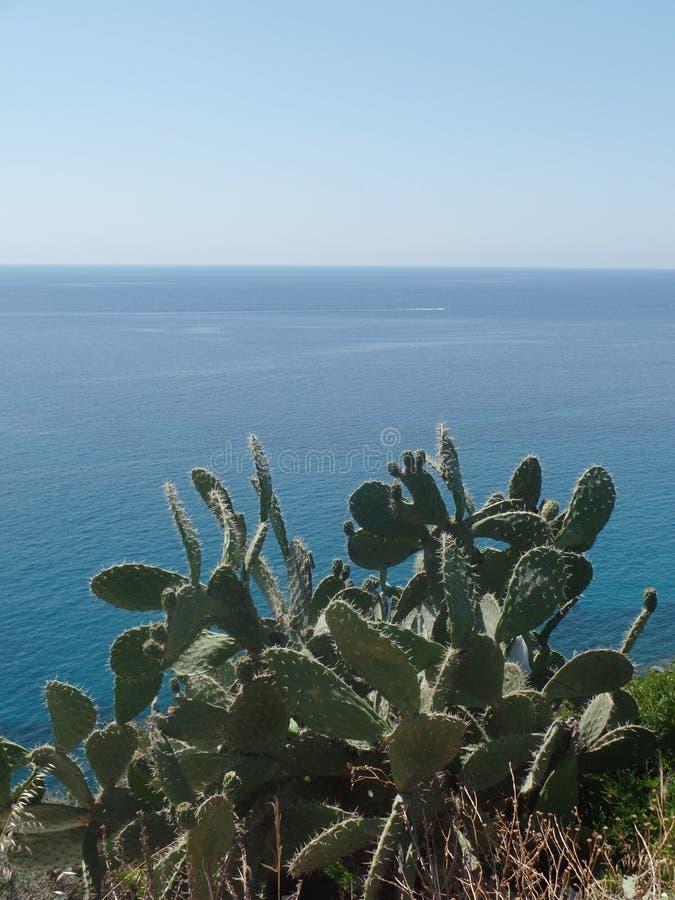 生长沿撒丁岛海岸的仙人掌植物 库存图片