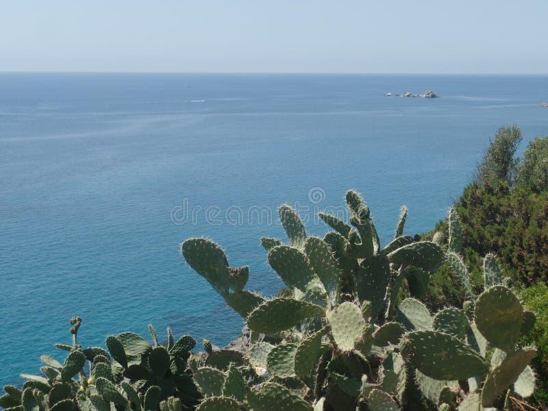 生长沿撒丁岛海岸的仙人掌植物 免版税库存图片