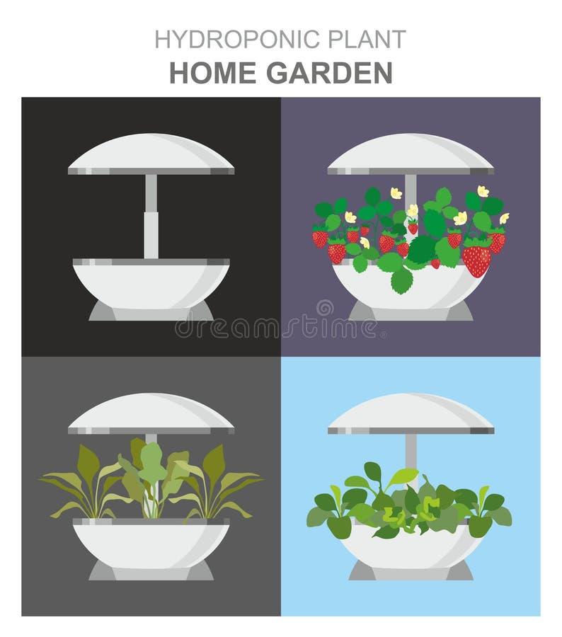 生长的不同的植物,草莓,莴苣水耕的系统,没有土壤,家庭菜园设施 皇族释放例证