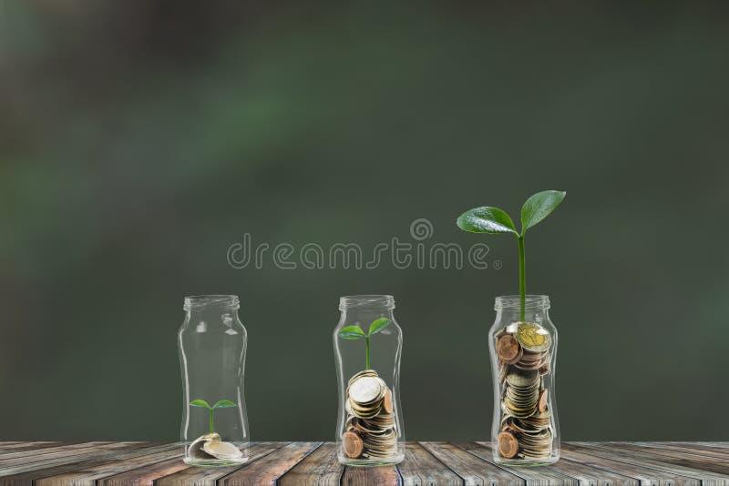 生长的金钱逐步,生长在3玻璃瓶子的堆硬币 攒钱,金钱投资概念 免版税库存图片