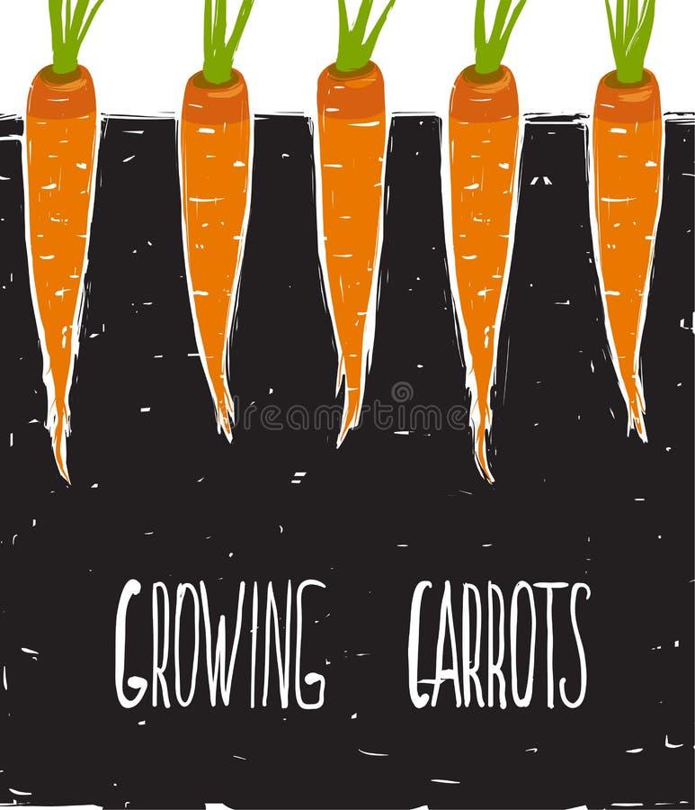 生长红萝卜单图和字法 向量例证
