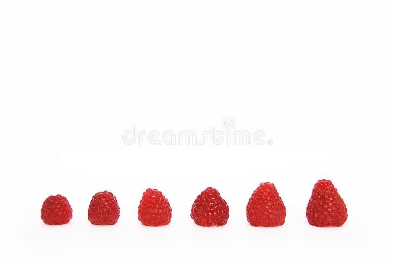 生长莓 库存图片