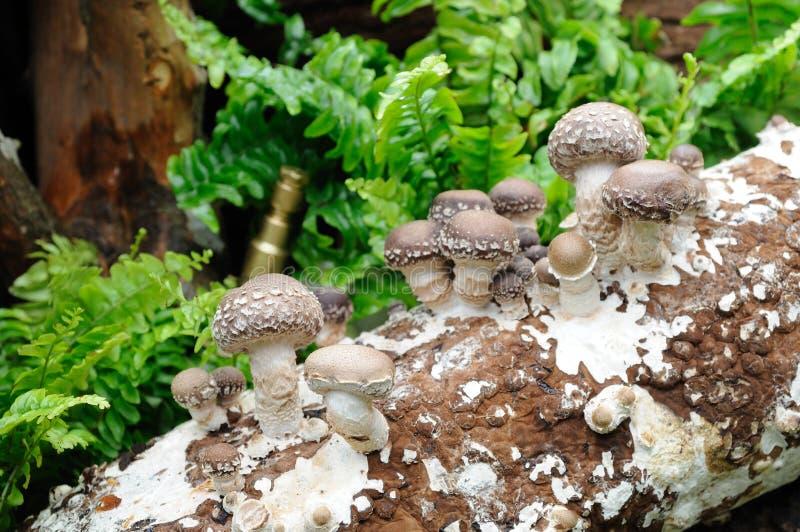生长蘑菇 免版税库存图片
