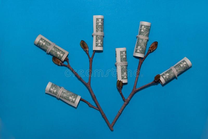 生长金钱树 企业概念查出的成功白色 有年轻芽的植物在一张纸币 库存照片