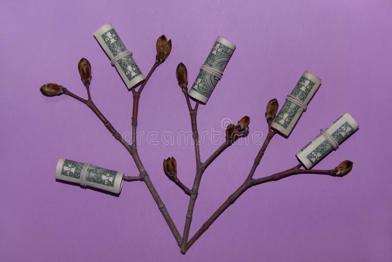 生长金钱树 有年轻芽的植物在一张纸币 财务和投资概念 图库摄影