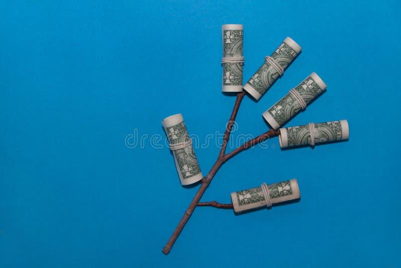 生长金钱树 有年轻芽的植物在一张纸币 财务和投资概念 免版税库存图片