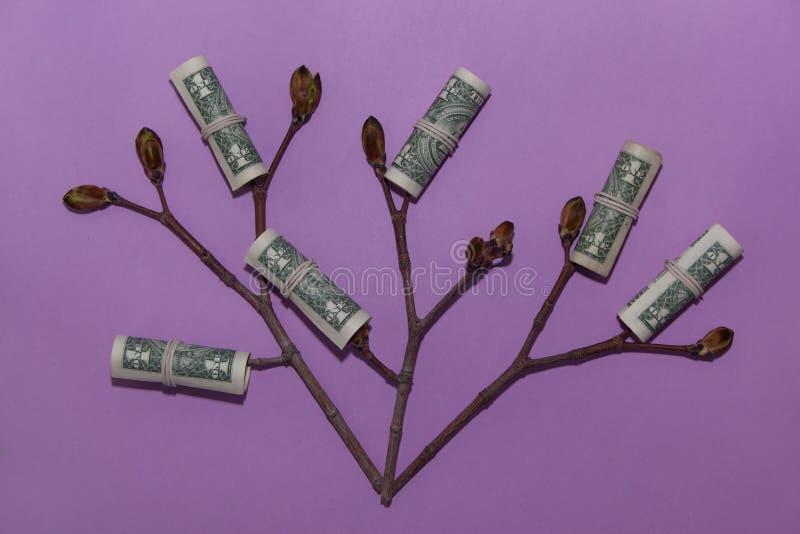 生长金钱树 有年轻芽的植物在一张纸币 财务和投资概念 免版税图库摄影