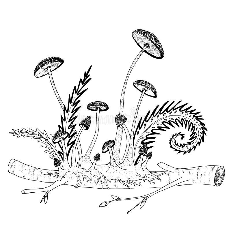 生长从一根枝杈的易碎的蘑菇,有蕨、芽和词根的 彩图的手拉的例证 皇族释放例证
