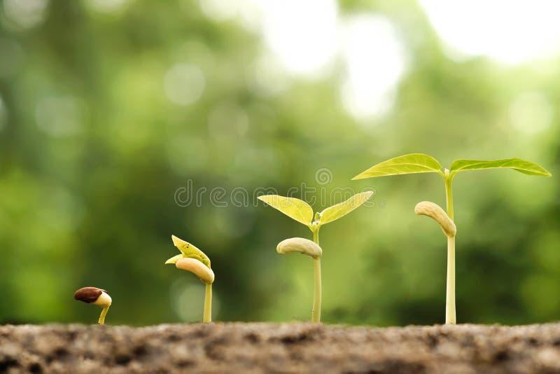 download 生长婴孩植物 库存照片.图片