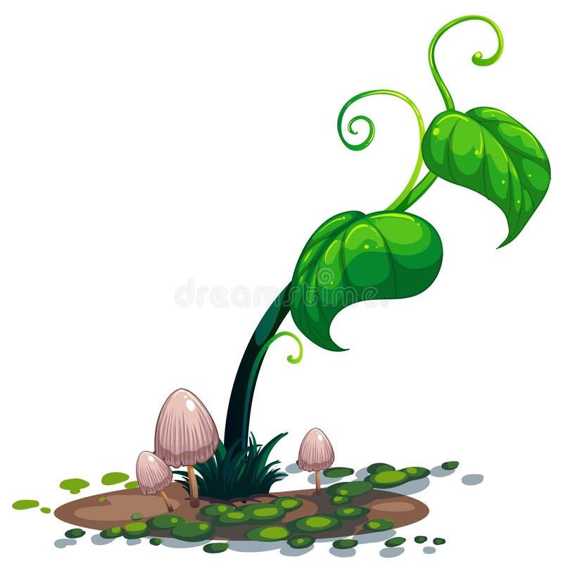 生长绿色植物 库存例证
