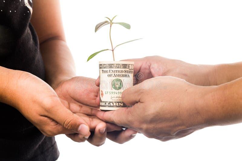 生长从USD货币, symbolizi的提出植物的概念 免版税图库摄影
