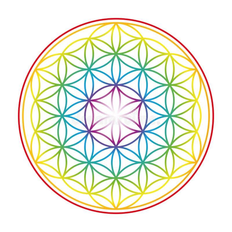 生活五颜六色的充满活力的焕发花  库存例证