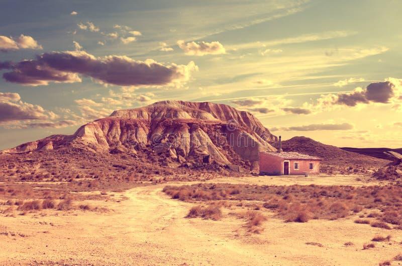 生活方式 孤零零生活在沙漠 库存图片