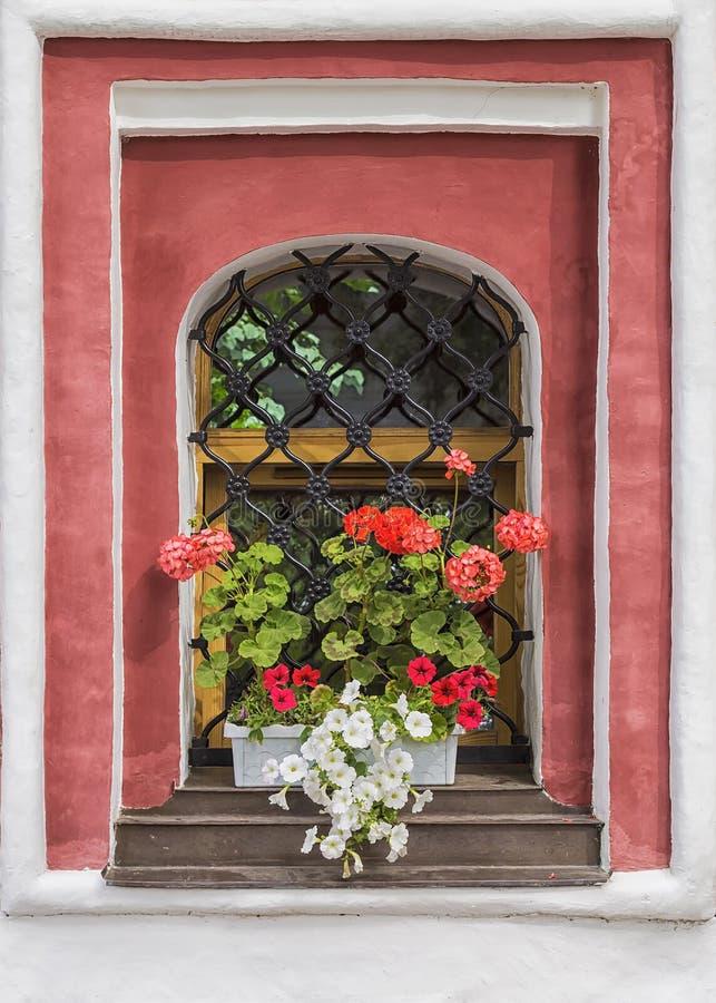 用一朵红色大竺葵和白色喇叭花装饰的老窗口 库存照片