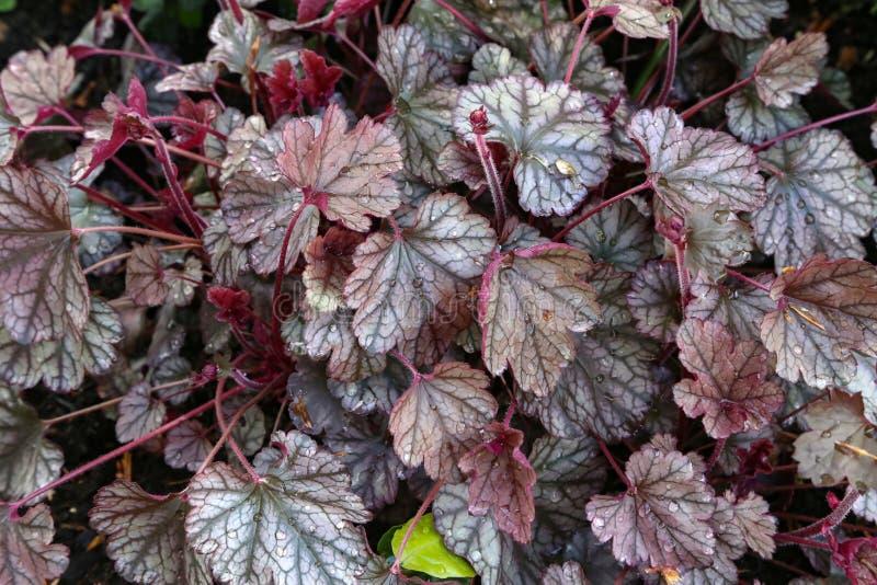 用下落盖的红褐色的叶子在雨以后 库存照片