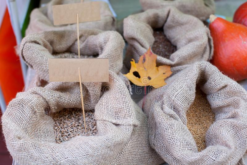 用不同的五谷的麻袋布袋子 查出的叶子槭树 库存图片