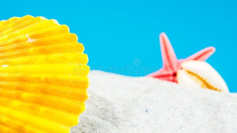 用不同的壳的沙子海滩 免版税库存图片