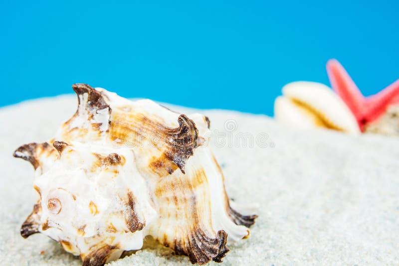 用不同的壳的沙子海滩 免版税库存照片