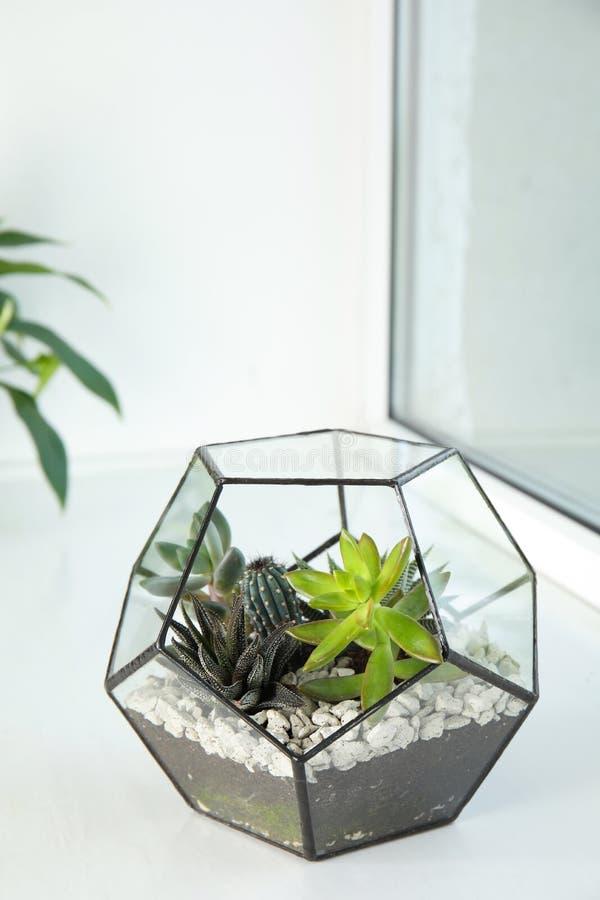 用不同的多汁植物的玻璃florarium在窗台 库存图片