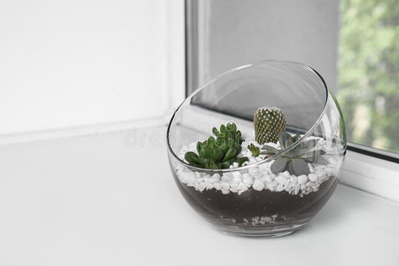 用不同的多汁植物的玻璃florarium在窗台 库存照片