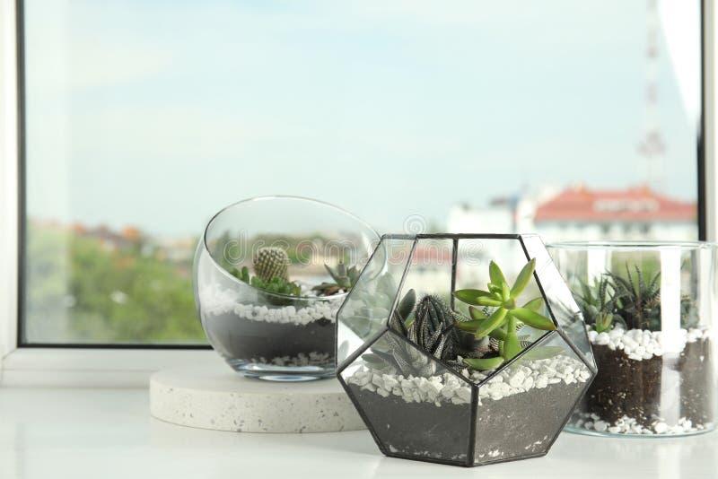用不同的多汁植物的玻璃florariums在窗台 库存图片