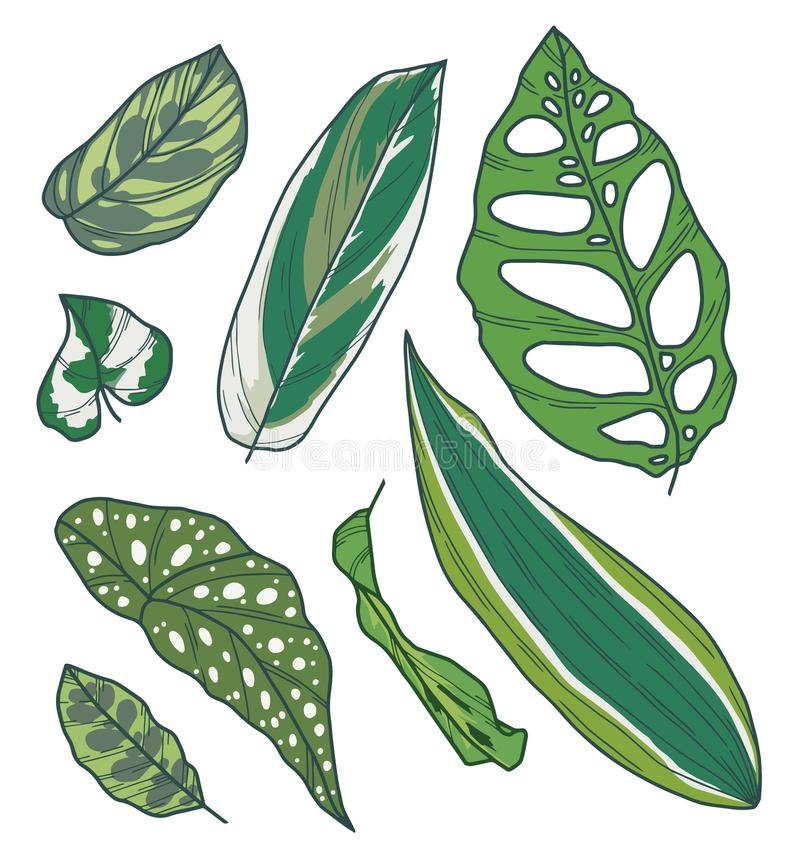 用不同的异乎寻常的室内植物叶子的得出的传染媒介艺术品收藏象Calathea、秋海棠、Pothos、龙血树属植物或者Monstera 向量例证