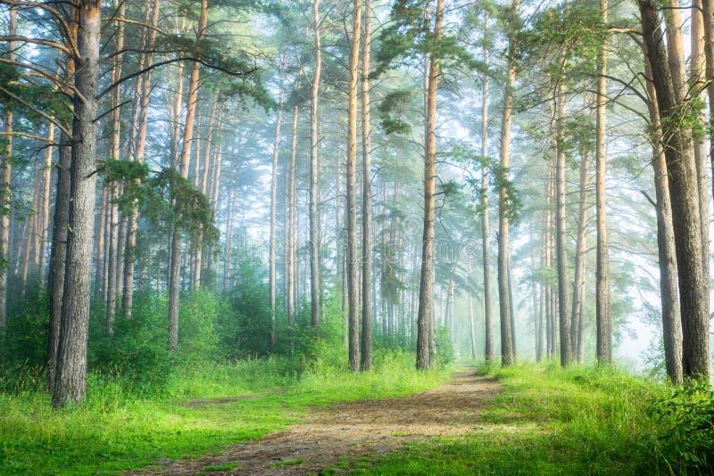 用不同的树的美丽的夏天森林 库存图片
