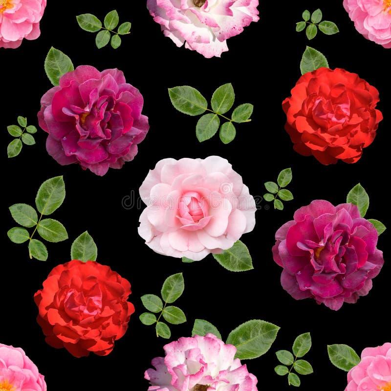 用不同的玫瑰色花的无缝的背景 皇族释放例证