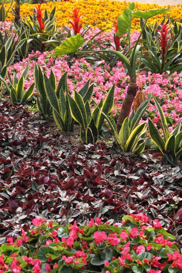 用不同的花和植物的环境美化的围场 库存照片