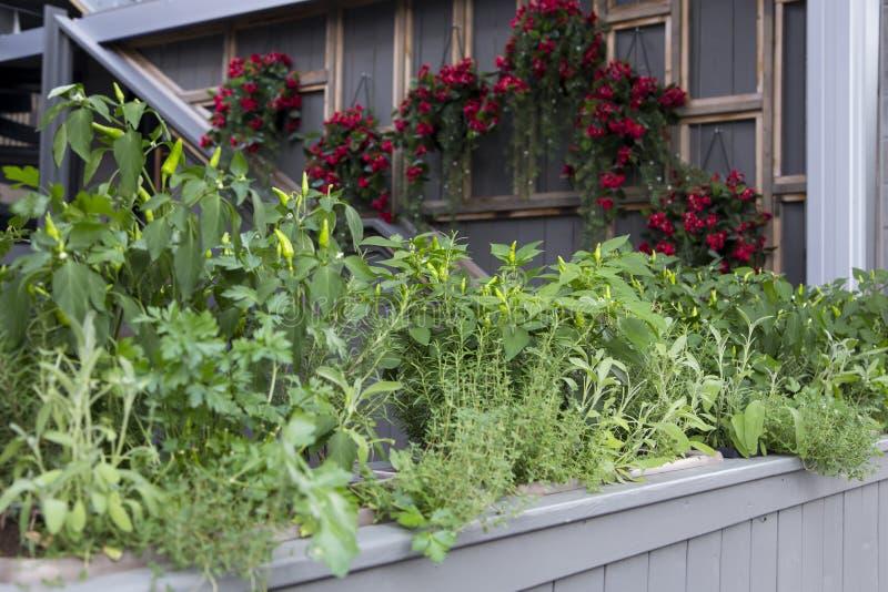 用不同的草本、辣椒和菜的容器庭院在庭院的边路边 免版税库存照片