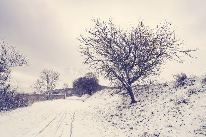 用与appletree的雪盖的路 免版税库存照片