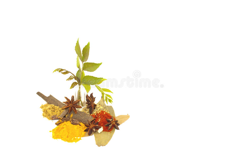 用于咖喱做的香料的分类 免版税库存照片