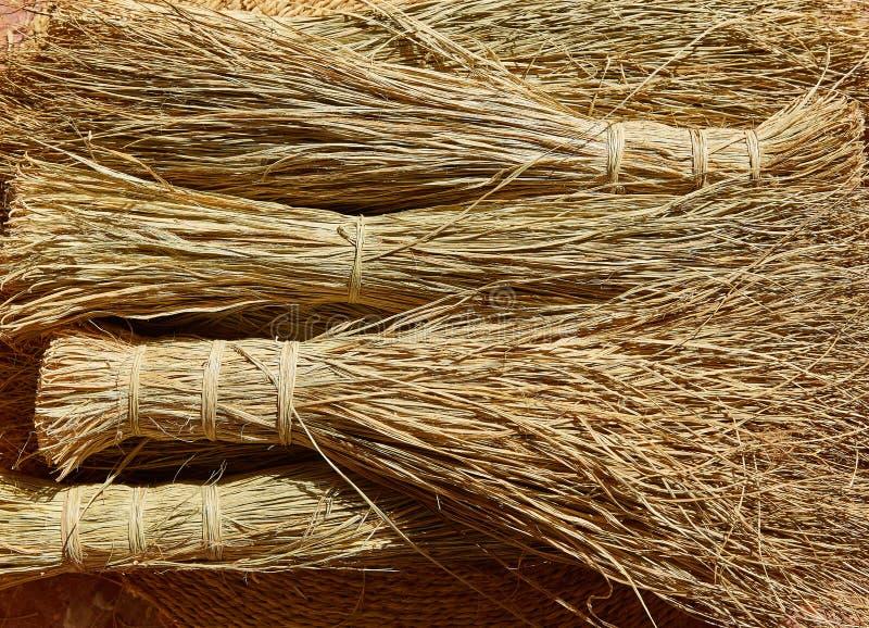 用于工艺编织品的针茅草的halfah草 库存照片