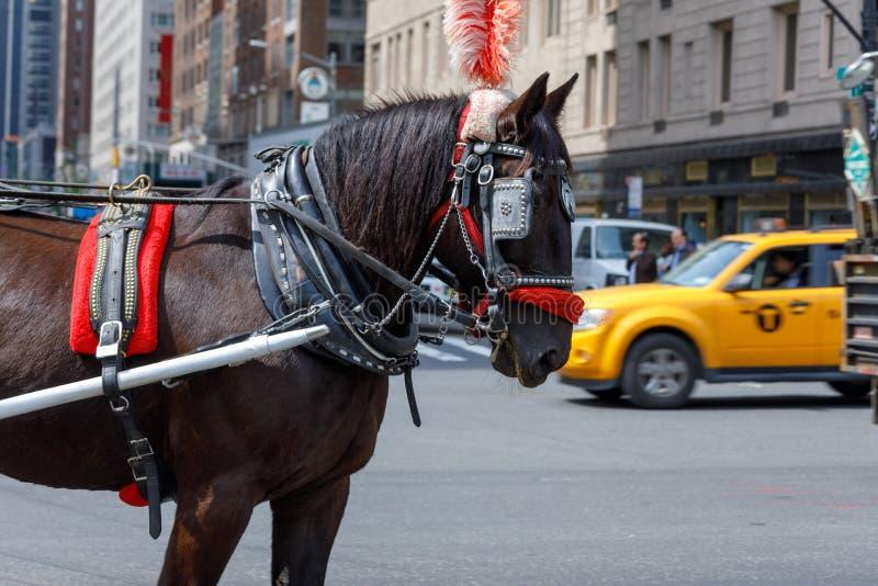 用于支架的马通过NYC的中央公园乘坐 库存图片