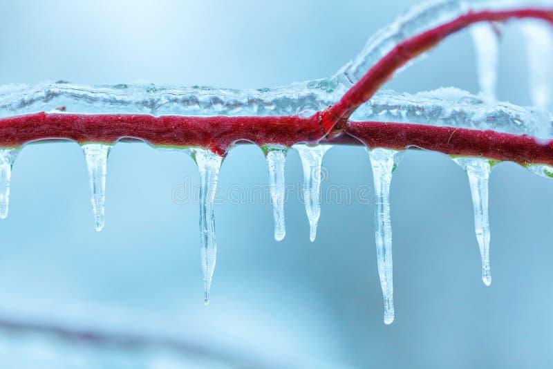 用冰报道的分支在冬天 免版税库存照片