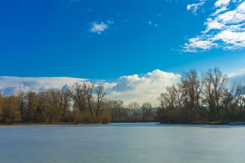 用冰薄层盖的小湖,围拢由树 免版税库存照片