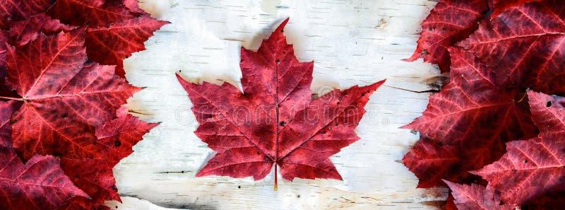用叶子做的加拿大旗子在桦树-横幅 免版税库存图片