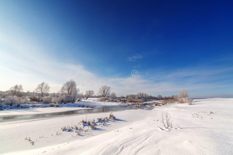 用在一条冻河的河岸的树冰盖的树 免版税图库摄影
